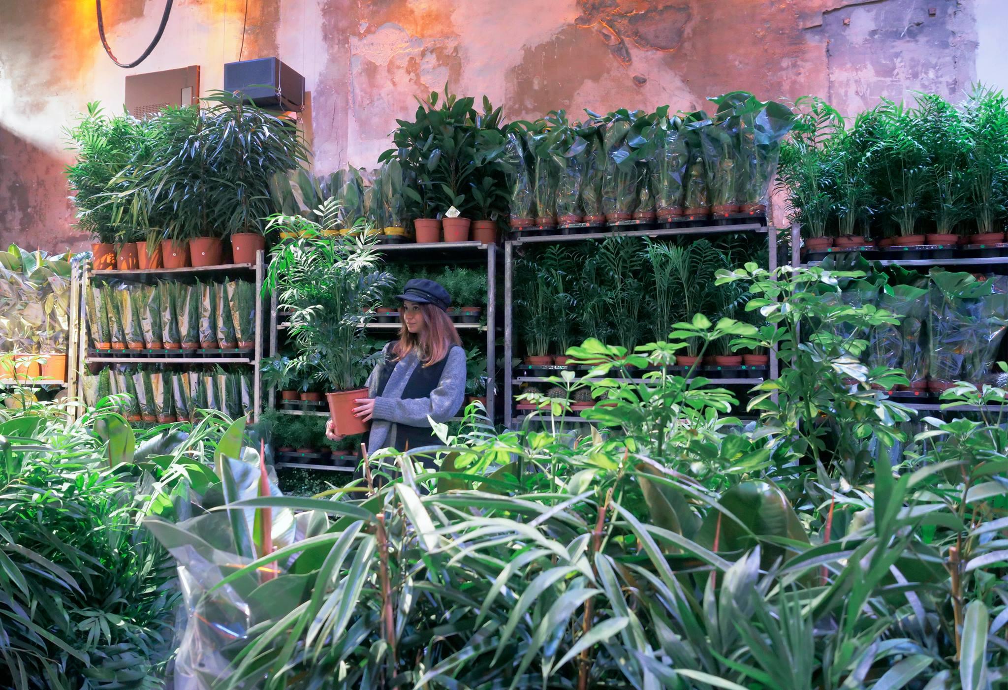 Plantes pour tous grande vente de plantes petits prix for Plante pour tous
