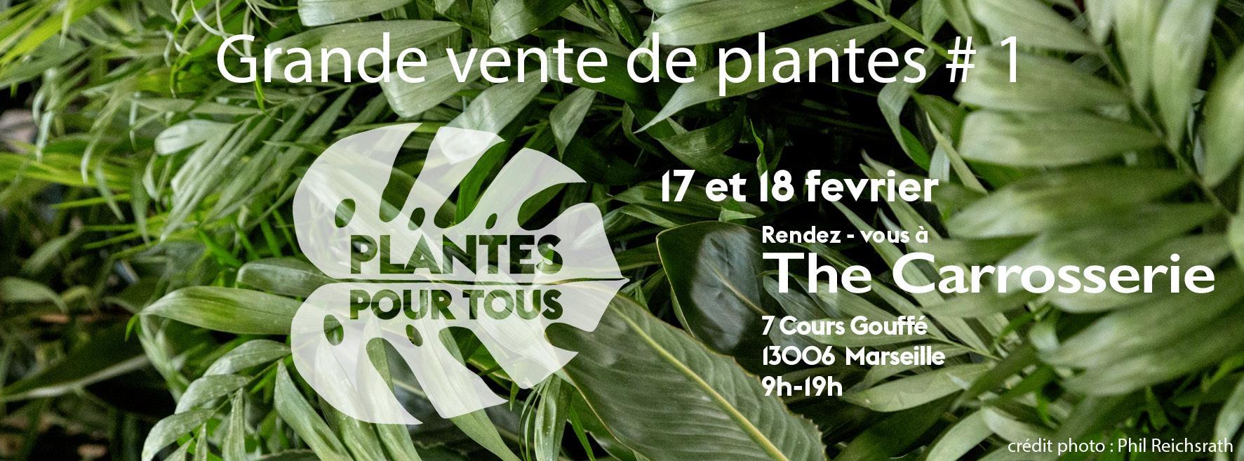 Plantes pour tous grande vente de plantes petits prix for Tous les plantes